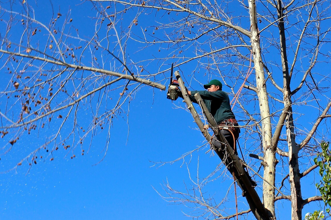 Contact Us-Escondido CA Tree Trimming and Stump Grinding Services-We Offer Tree Trimming Services, Tree Removal, Tree Pruning, Tree Cutting, Residential and Commercial Tree Trimming Services, Storm Damage, Emergency Tree Removal, Land Clearing, Tree Companies, Tree Care Service, Stump Grinding, and we're the Best Tree Trimming Company Near You Guaranteed!