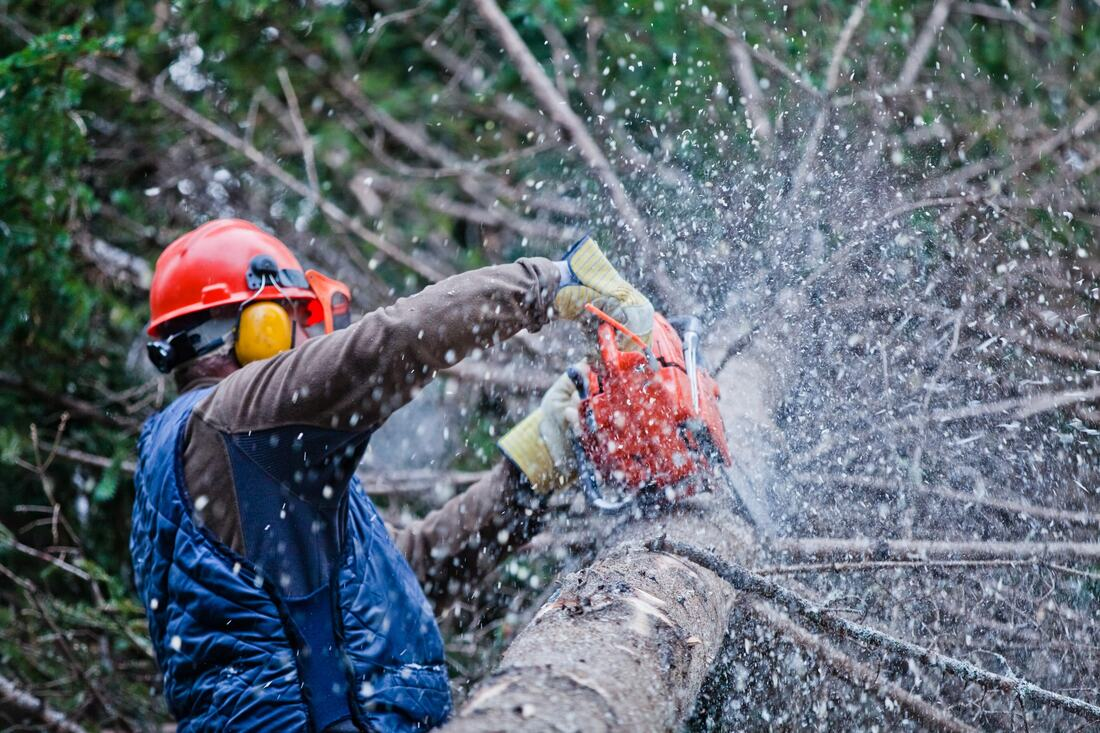 Del Dios-Escondido CA Tree Trimming and Stump Grinding Services-We Offer Tree Trimming Services, Tree Removal, Tree Pruning, Tree Cutting, Residential and Commercial Tree Trimming Services, Storm Damage, Emergency Tree Removal, Land Clearing, Tree Companies, Tree Care Service, Stump Grinding, and we're the Best Tree Trimming Company Near You Guaranteed!