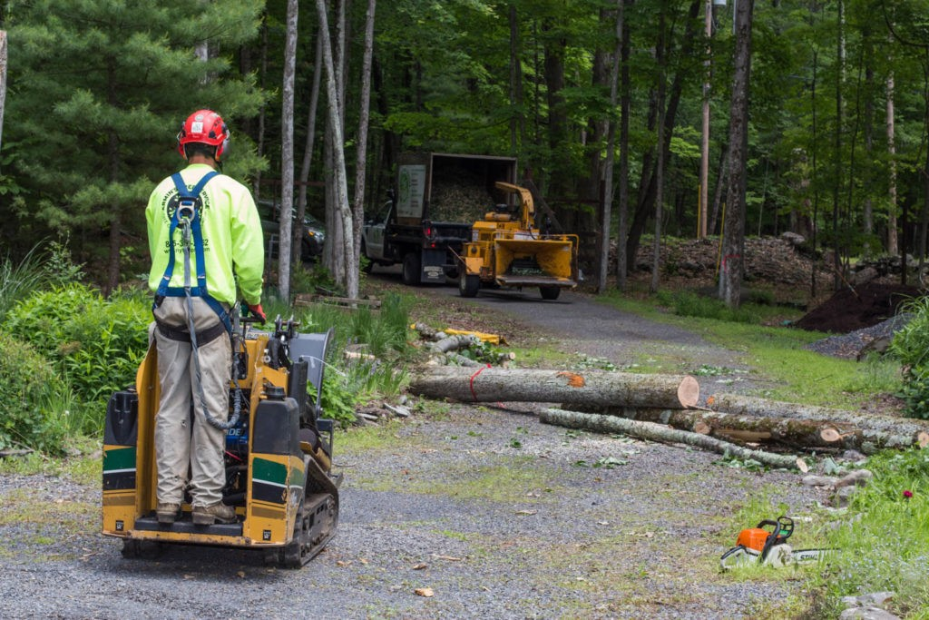 Emergency Tree Removal-Escondido CA Tree Trimming and Stump Grinding Services-We Offer Tree Trimming Services, Tree Removal, Tree Pruning, Tree Cutting, Residential and Commercial Tree Trimming Services, Storm Damage, Emergency Tree Removal, Land Clearing, Tree Companies, Tree Care Service, Stump Grinding, and we're the Best Tree Trimming Company Near You Guaranteed!