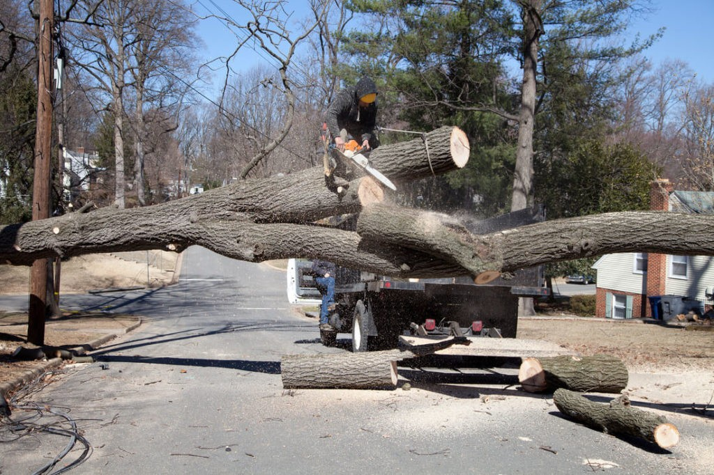 Residential Tree Services-Escondido CA Tree Trimming and Stump Grinding Services-We Offer Tree Trimming Services, Tree Removal, Tree Pruning, Tree Cutting, Residential and Commercial Tree Trimming Services, Storm Damage, Emergency Tree Removal, Land Clearing, Tree Companies, Tree Care Service, Stump Grinding, and we're the Best Tree Trimming Company Near You Guaranteed!