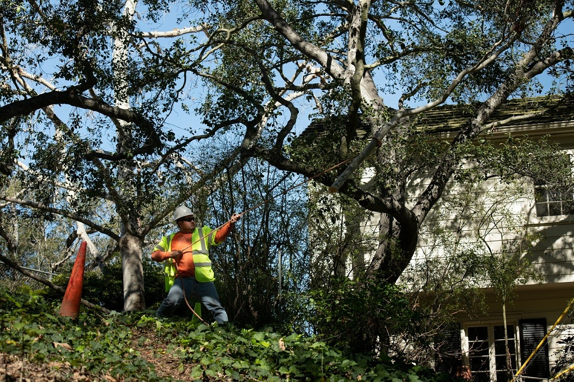 San Marcos-Escondido CA Tree Trimming and Stump Grinding Services-We Offer Tree Trimming Services, Tree Removal, Tree Pruning, Tree Cutting, Residential and Commercial Tree Trimming Services, Storm Damage, Emergency Tree Removal, Land Clearing, Tree Companies, Tree Care Service, Stump Grinding, and we're the Best Tree Trimming Company Near You Guaranteed!