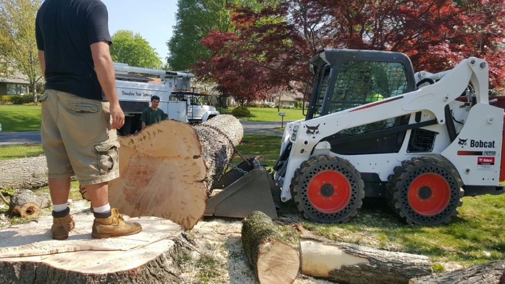 San Pasqual Valley-Escondido CA Tree Trimming and Stump Grinding Services-We Offer Tree Trimming Services, Tree Removal, Tree Pruning, Tree Cutting, Residential and Commercial Tree Trimming Services, Storm Damage, Emergency Tree Removal, Land Clearing, Tree Companies, Tree Care Service, Stump Grinding, and we're the Best Tree Trimming Company Near You Guaranteed!