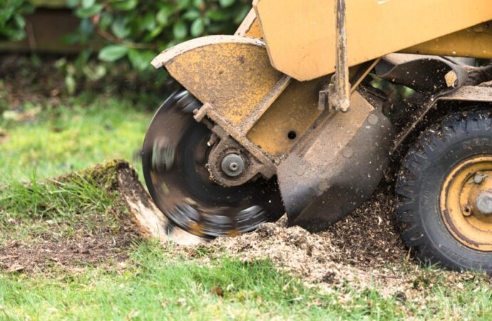 Stump Grinding-Escondido CA Tree Trimming and Stump Grinding Services-We Offer Tree Trimming Services, Tree Removal, Tree Pruning, Tree Cutting, Residential and Commercial Tree Trimming Services, Storm Damage, Emergency Tree Removal, Land Clearing, Tree Companies, Tree Care Service, Stump Grinding, and we're the Best Tree Trimming Company Near You Guaranteed!