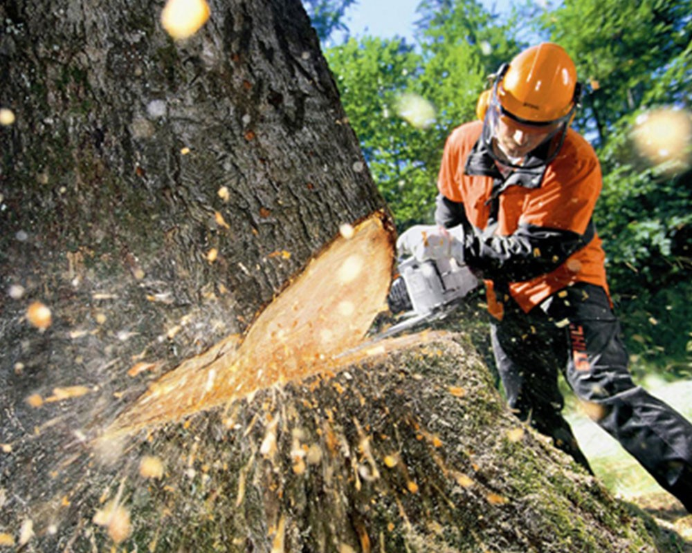 Tree Cutting-Escondido CA Tree Trimming and Stump Grinding Services-We Offer Tree Trimming Services, Tree Removal, Tree Pruning, Tree Cutting, Residential and Commercial Tree Trimming Services, Storm Damage, Emergency Tree Removal, Land Clearing, Tree Companies, Tree Care Service, Stump Grinding, and we're the Best Tree Trimming Company Near You Guaranteed!